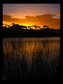 Reeds and sunrise over water